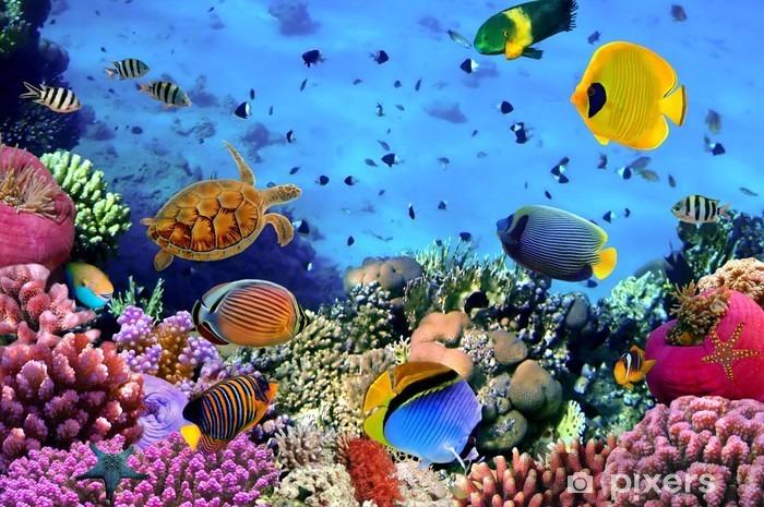 Carta da Parati in Vinile Foto di una colonia di corallo -