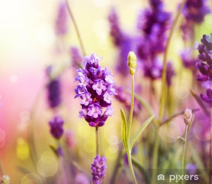 Pixerstick Sticker Lavendel veld - Thema's