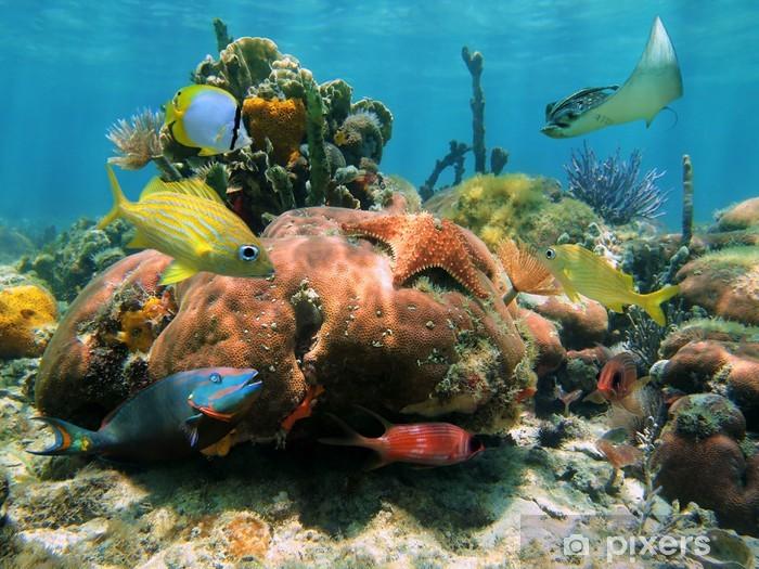 Papier peint vinyle Récif de corail peu profonds - Récif de corail