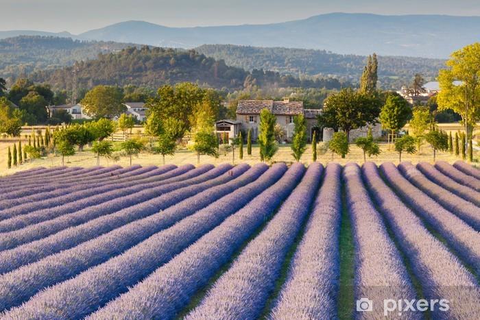 Papier peint vinyle Champ de lavande en Provence - Styles