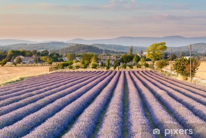 Papier peint vinyle Champ de lavande en Provence - Thèmes