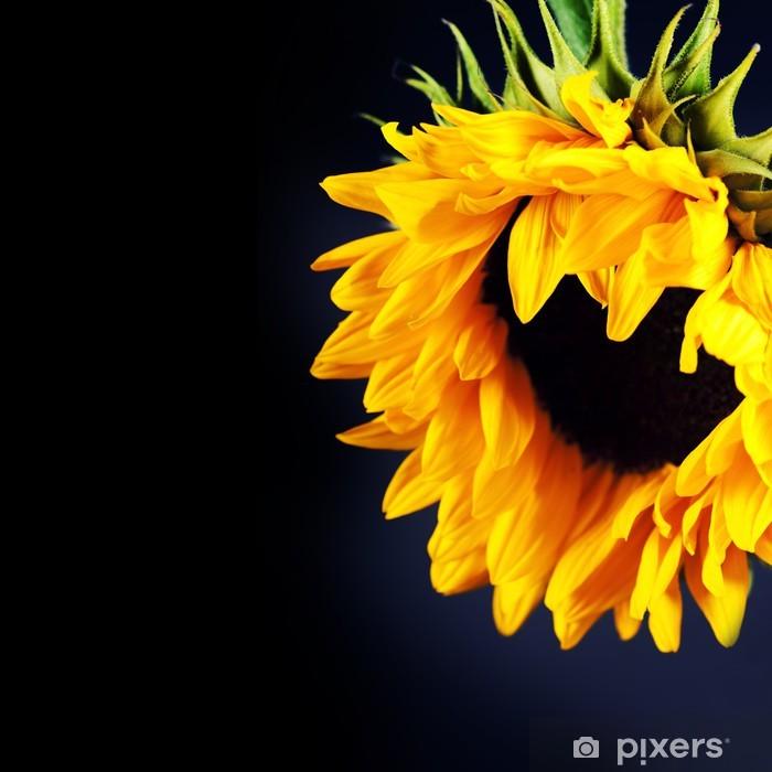 Poster Sonnenblume - Themen