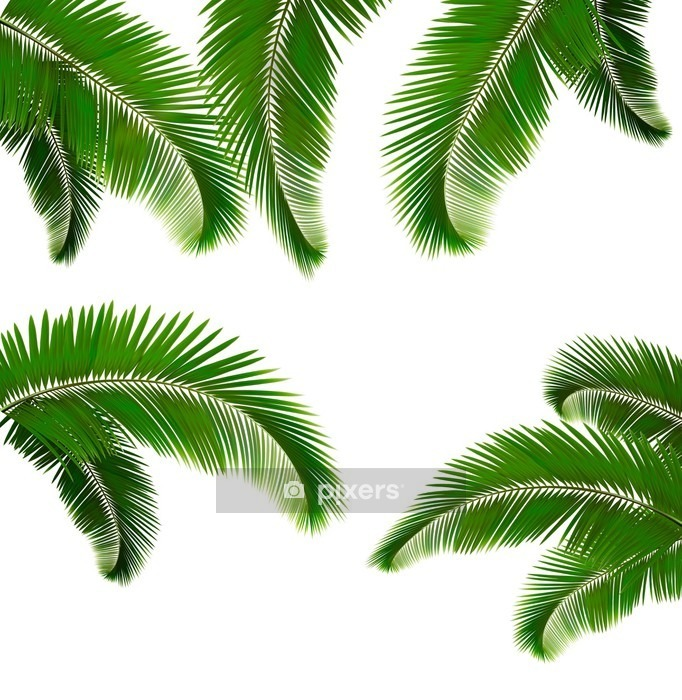 Set of palm leaves on white background Vector illustration Wall Decal - Wilderness