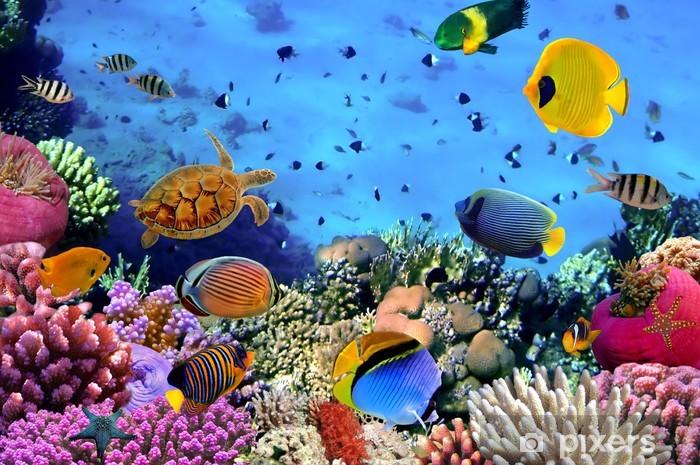 Vinyl Fotobehang Foto van een koraal kolonie - Thema's