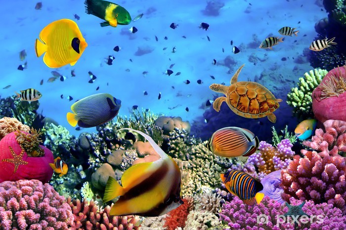 Photo of a coral colony Self-Adhesive Wall Mural - Themes