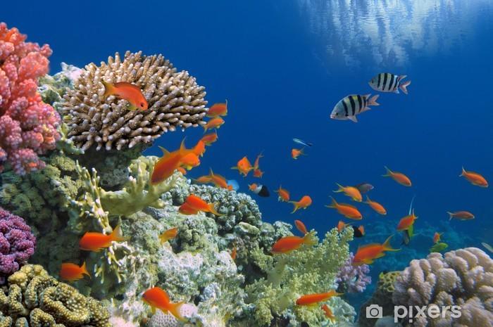 Fotomural Estándar Pescados tropicales en el filón coralino en el Mar Rojo - Destinos