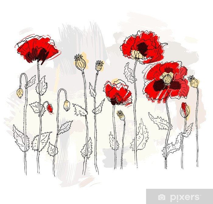 Poster Rote Mohnblumen auf einem weißen Hintergrund - Blumen