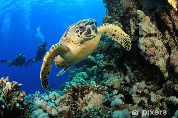 Papier peint vinyle La tortue imbriquée et les plongeurs - Thèmes