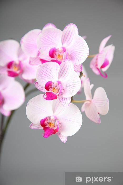 Sticker Pixerstick Orchide rose - Thèmes