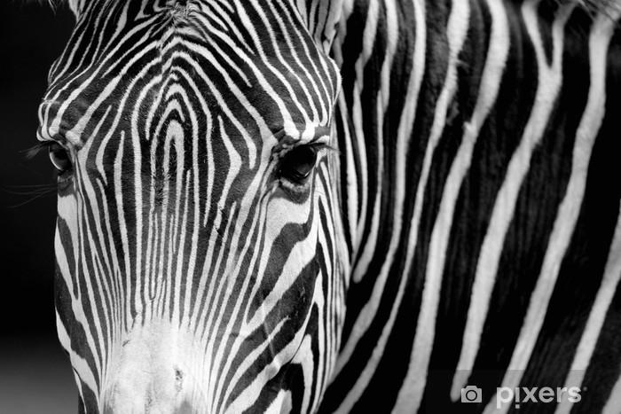Fotomural Estándar Cebras - Temas