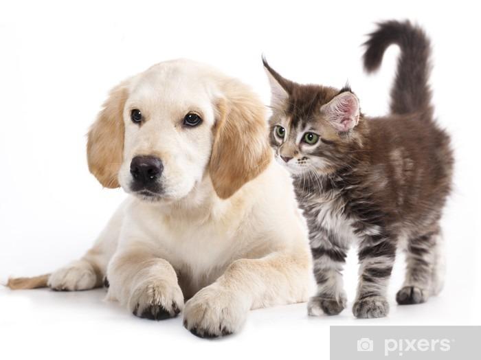 Pixerstick Sticker Kat en hond - Muursticker