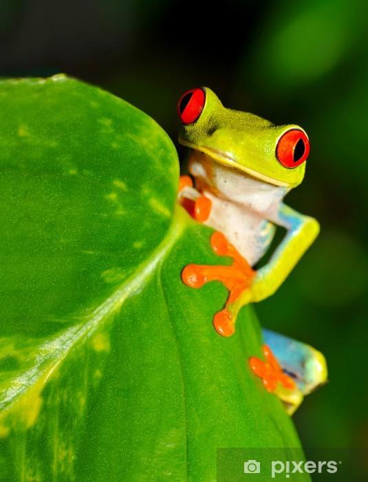 Vinilo Pixerstick Árbol rojo eyed rana verde o hoja llamativo, Costa Rica - América