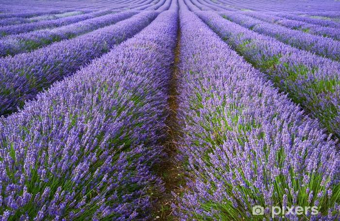 Fototapeta winylowa Piękny krajobraz z pola lawendy dramatycznego nieba - Tematy