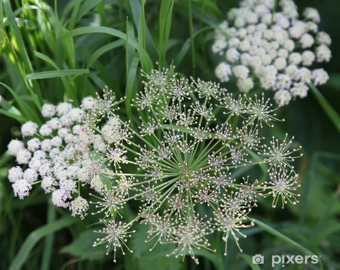 Nálepka Pixerstick Kytice blanc dans les champs. - Květiny