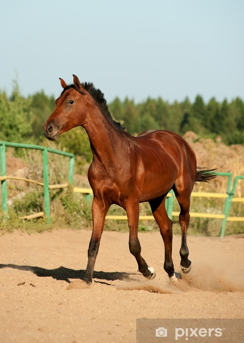 horse walking Pixerstick Sticker - Mammals