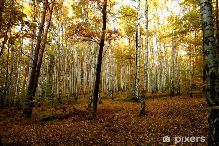 Adesivo Pixerstick Autunno foresta - Temi