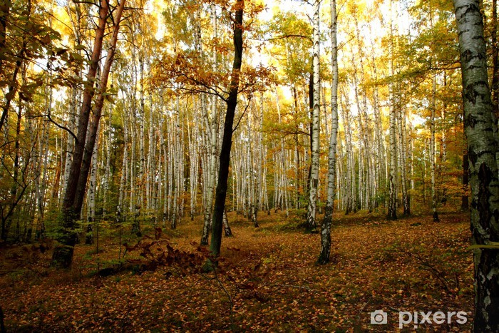 Naklejka Pixerstick Jesienny las - Tematy