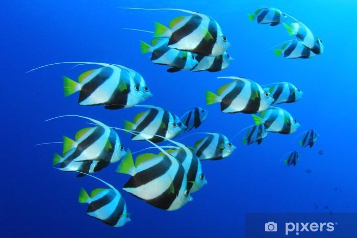 Sticker Pixerstick Bannerfish de scolarisation dans l'eau bleue - Thèmes