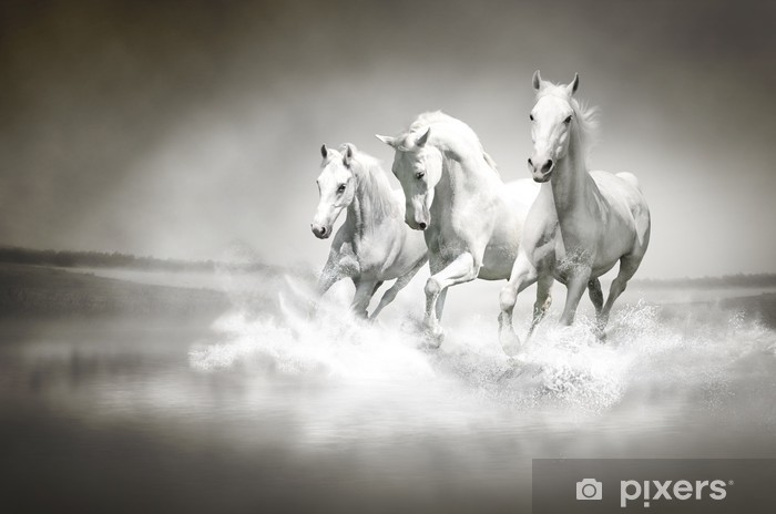 Afwasbaar Fotobehang Kudde witte paarden die door water - iStaging