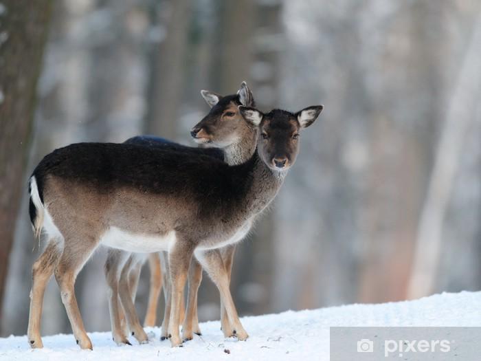 Nálepka Pixerstick Damwild, Winter, daňčí - Savci