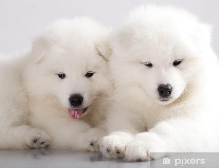 Vinilo para Nevera Cachorros de perro samoyedo divertidos - Mamíferos