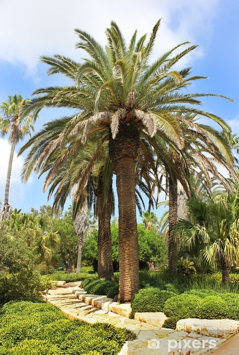 palm grove in the Park Ramat Hanadiv, Israel Pixerstick Sticker - The Middle East