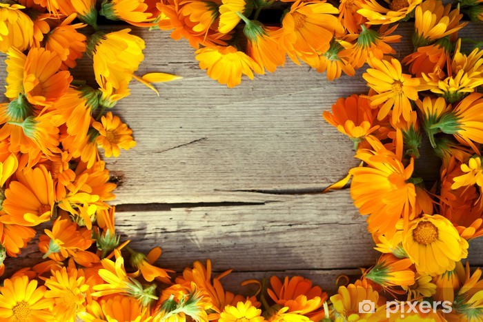 Marigold Flowers Over Wooden Background Autumn Wall Mural Pixers We Live To Change