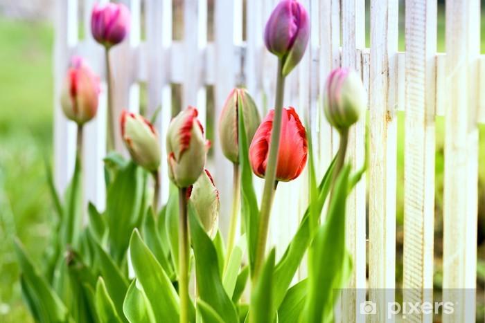 Papier peint vinyle Tulipes dans la cour avant - Saisons