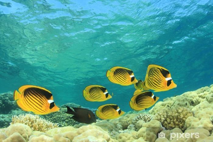 Naklejka Pixerstick Tropical Fish on Coral Reef: Butterflyfishes - Zwierzęta żyjące pod wodą