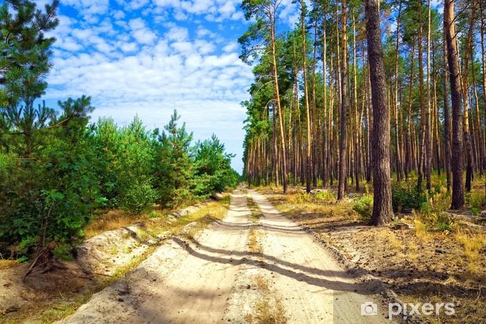 Papier peint vinyle Le chemin de terre à travers la forêt de pins - Sports d'extérieur