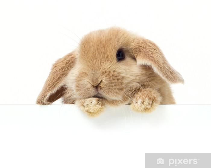 Pixerstick Dekor Söt kanin. Närbild porträtt på en vit bakgrund - Kaniner