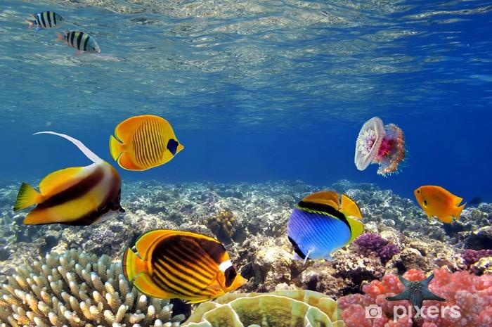 Fototapeta winylowa Podwodne życie rafy koralowej ciężko, Morze Czerwone, Egipt - iStaging