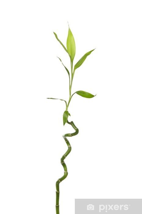 Pixerstick Aufkleber Isolierte Bambus-Blätter - Beauty und Körperpflege