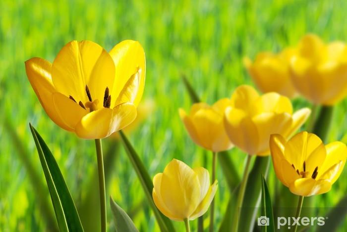 Sticker Pixerstick Tulips - Thèmes