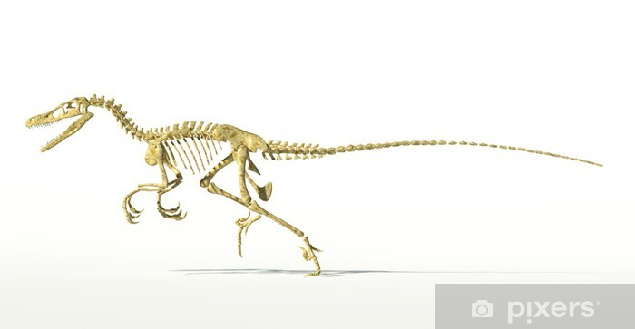 Naklejka Pixerstick Dinozaur velociraptor, pełny szkielet naukowo poprawne, sid - Naklejki na ścianę
