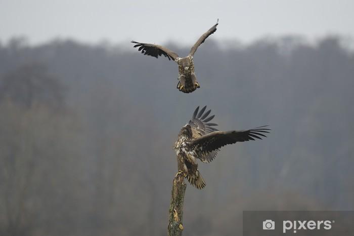 Carta da Parati in Vinile Aquila di mare - Uccelli