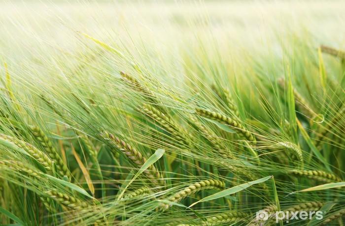 Carta da Parati in Vinile Getreide - iStaging