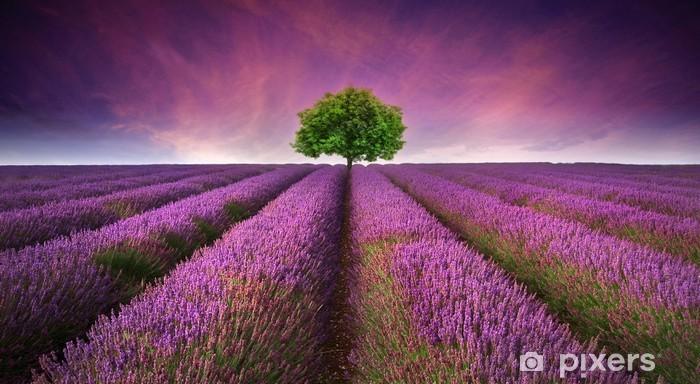Vinyl-Fototapete Atemberaubende Lavendelfeld Landschaft Sommer Sonnenuntergang mit einzelnen Baum -