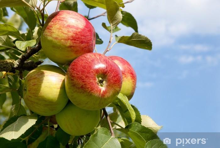 Pixerstick Sticker Roteren Boskop, Alte Apfelsorte - Vruchten