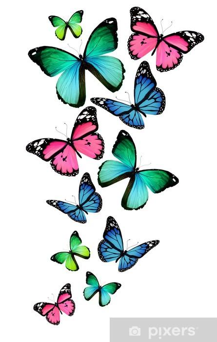 9a238bcd241 Mange forskellige sommerfugle, isoleret på hvid baggrund Vinyl fototapet