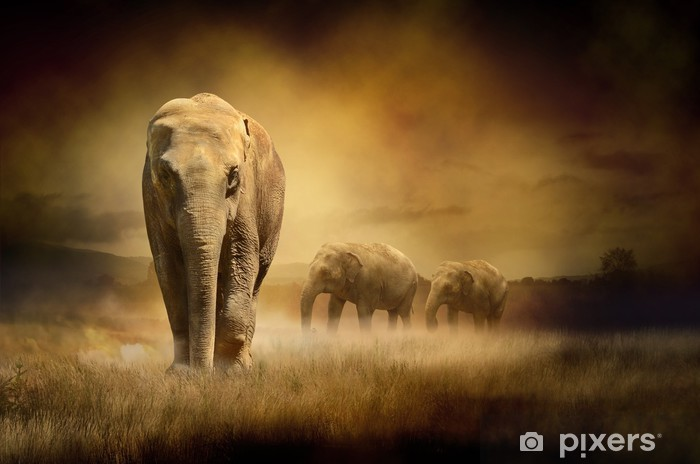 Elephants at sunset Pixerstick Sticker -