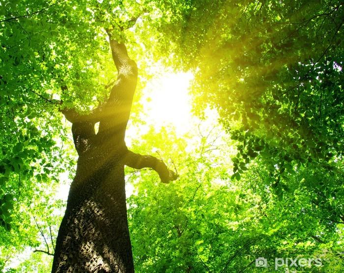 Vinyl-Fototapete Green leaves - Bäume