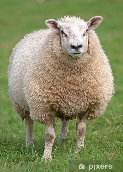 Papier peint vinyle Moutons laineux Fat - Mammifères