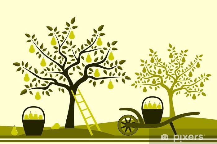 Papier peint vinyle Récolte de poires - Saisons