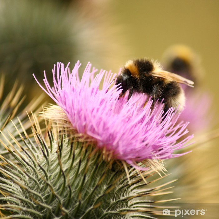detail of a busy bumblebee on milk thistle Pixerstick Sticker - Other Other