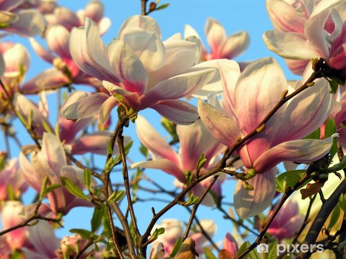Sticker Pixerstick Arbre de magnolia en fleurs - Thèmes
