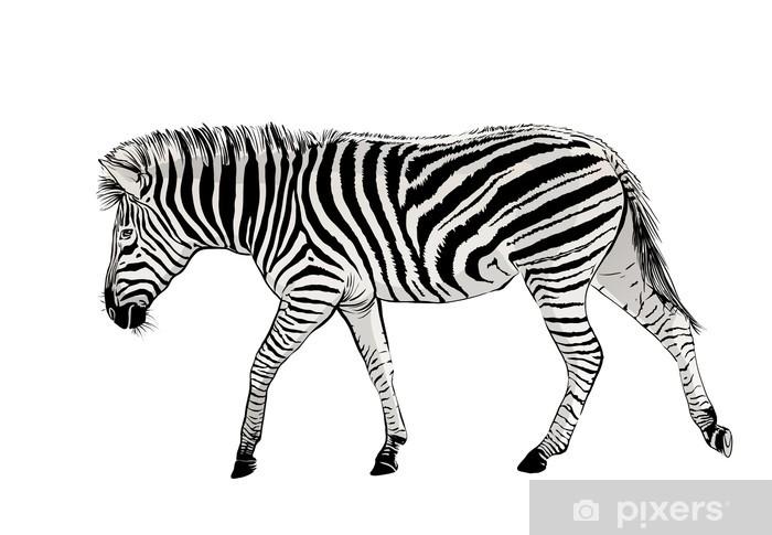 Vinyl-Fototapete Zebra - Säugetiere