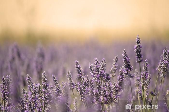 Vinil Duvar Resmi Çiçek ile Yaz Meadow. Lavanta. - Otlar