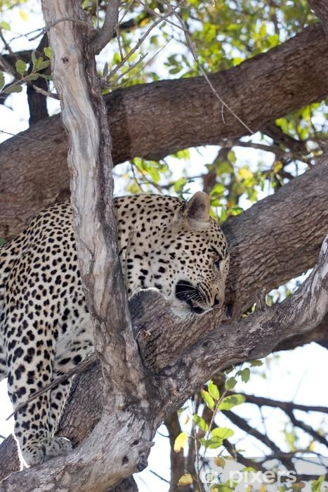 Fototapeta winylowa Leopard na drzewie - Afryka