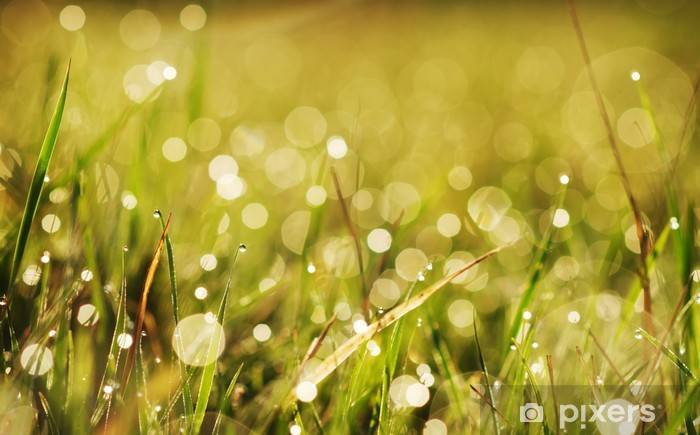 autumn grass with dew Vinyl Wall Mural - Plants
